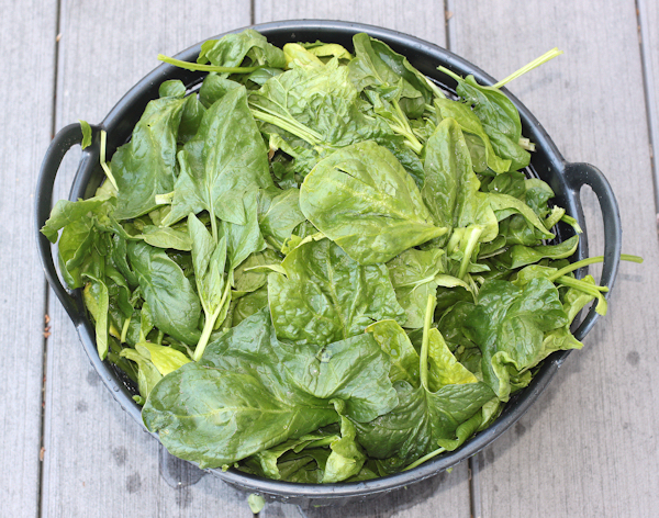 spinach from the greenhouse