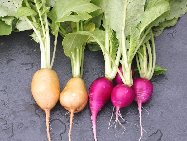 Helios and Plum Purple radishes