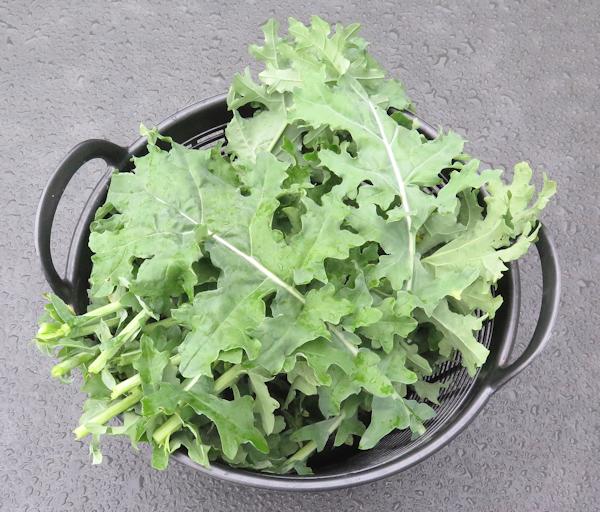 White Russian kale