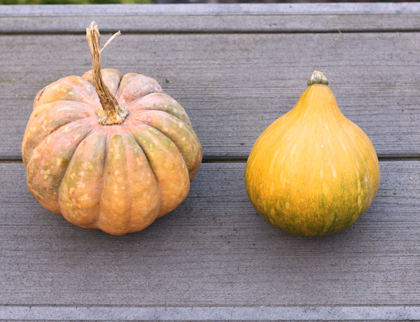 Black Futsu and Seminole squash