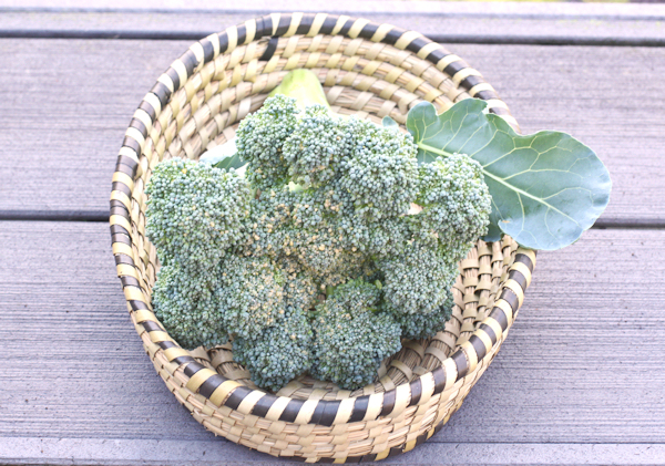 Goliath broccoli