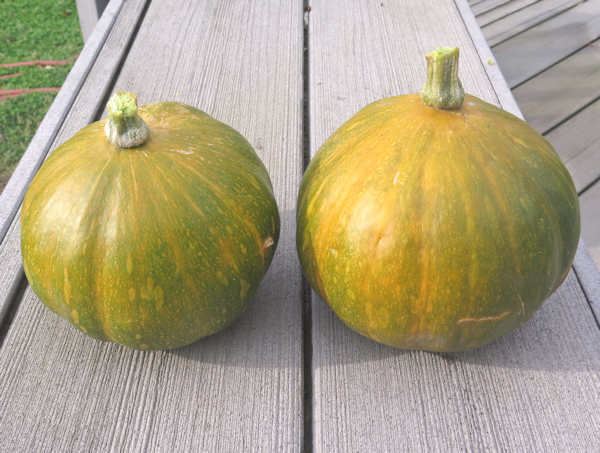 Seminole winter squash