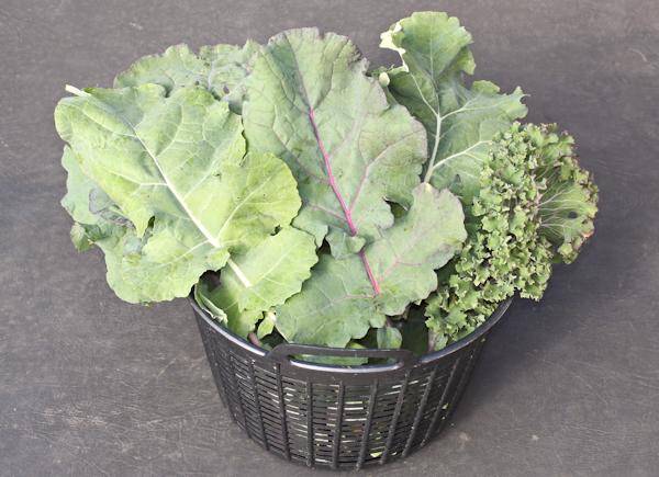 Wild Garden Mix kale