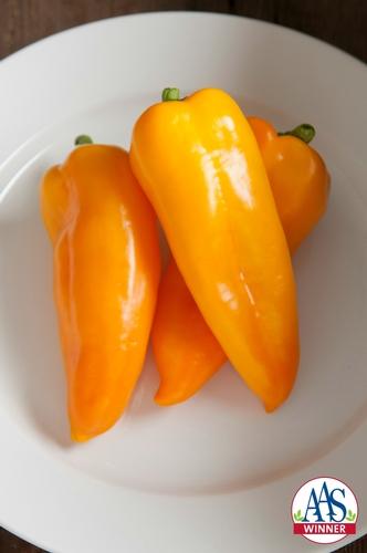 Pepper Cornito Giallo