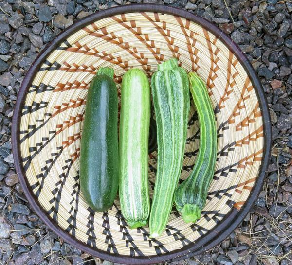 Astia, Striata d'Italia and Romanesco zucchini