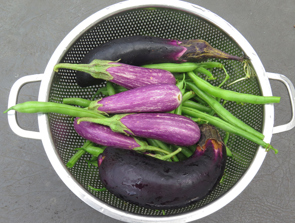 eggplant and beans