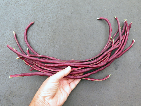 Red Noodle beans