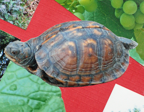 Timmy the Turtle in 2007