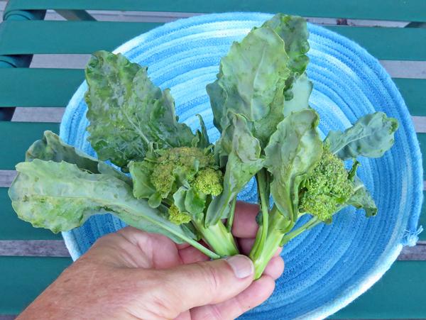broccoli Artwork