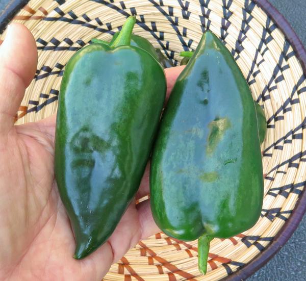 Bastan peppers