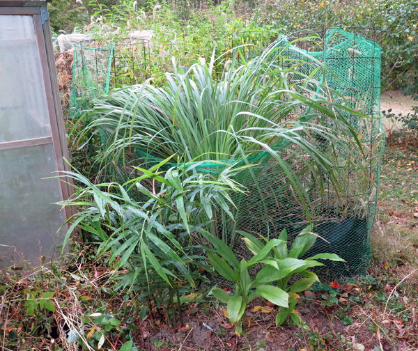 lemongrass and other plants