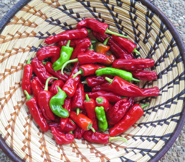 Pepperoncini peppers