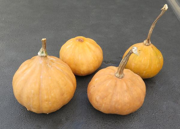 Seminole pumpkins