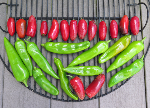 jalapeno and NuMex type peppers before smoking