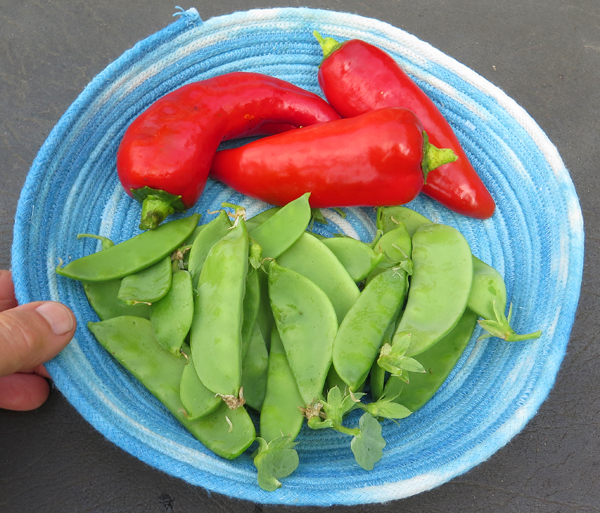 snow peas and Stocky Red Roaster peppers
