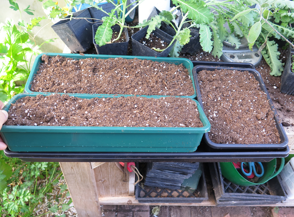 flats for growing microgreens