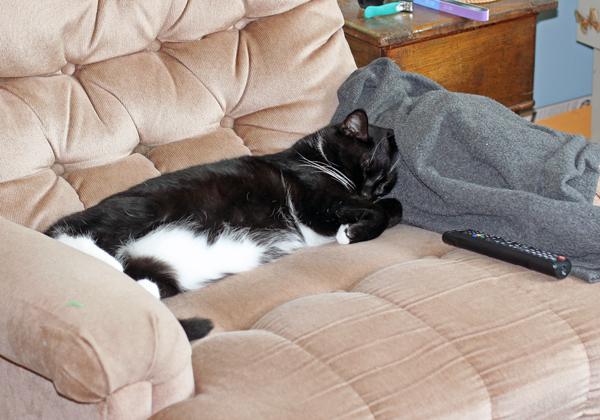 Ace sleeping