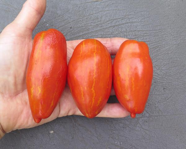 Marzano Fire tomatoes