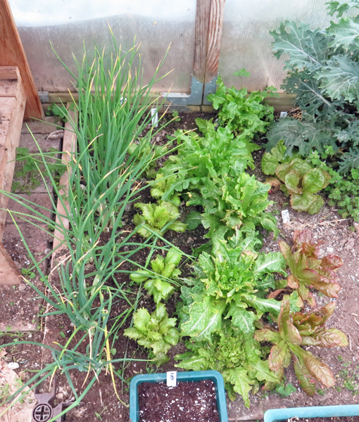 greenhouse bed on left side