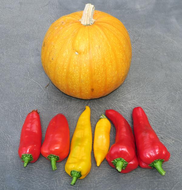 Cornito Rossa, Cornito Giallo and Carmen peppers
