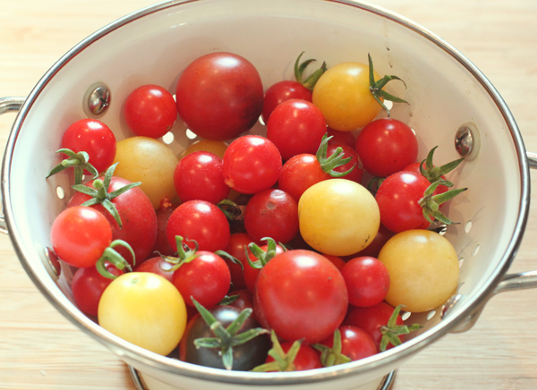 small-fruited tomatoes Mexico Midget, Snow White and Midnight Snack
