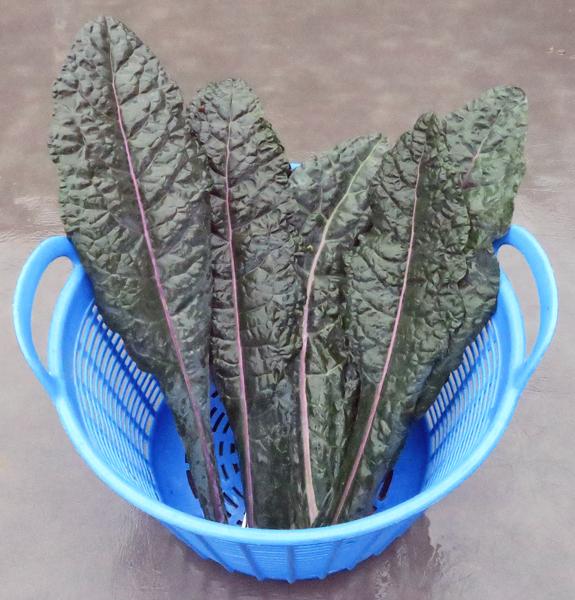 Dazzling Blue kale