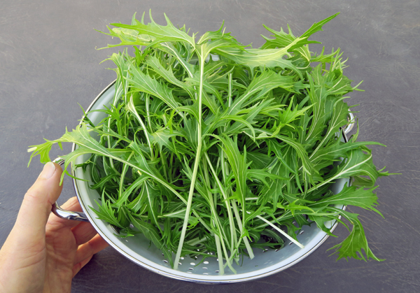 green mizuna