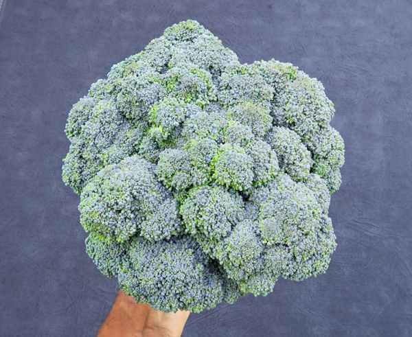 Gypsy broccoli