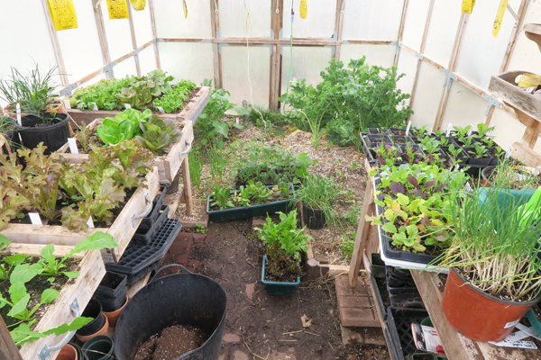 looking in the door of the greenhouse
