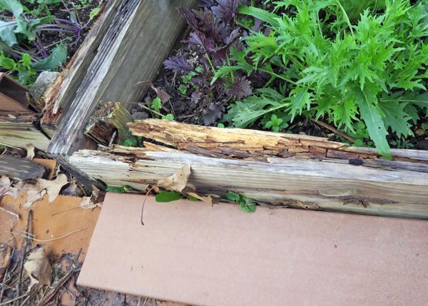 cold frame bed #3 showing damage