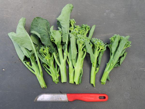 Apollo and Artwork broccoli