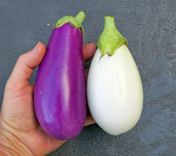 Dancer and Clara eggplant