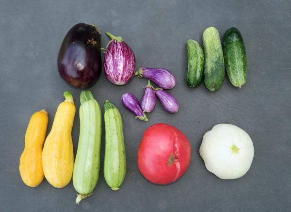 harvest of summer veggies