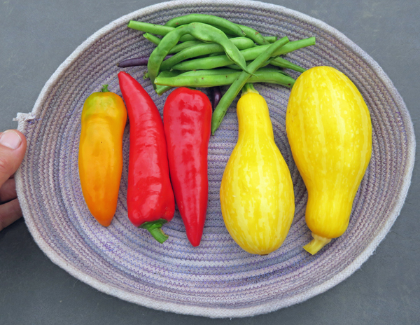 squash, peppers and beans