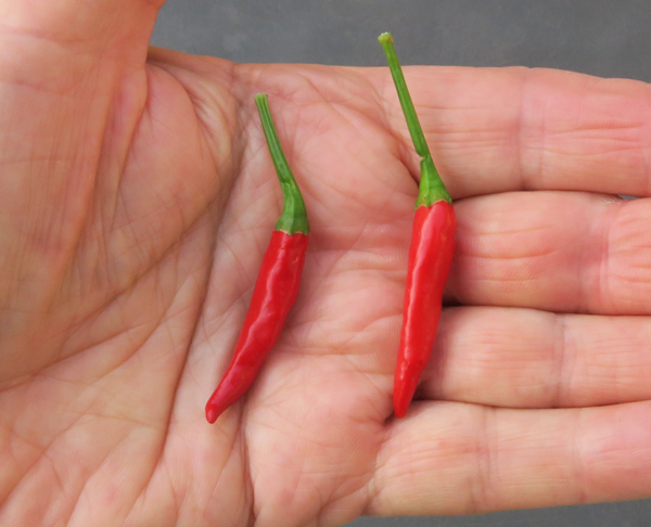 Thai Bird peppers