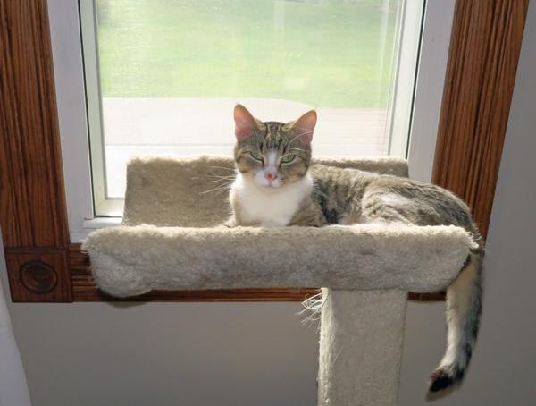Ally in the cat condo