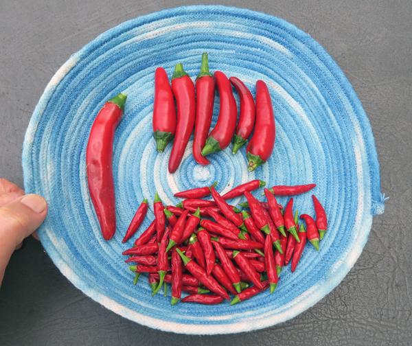Kimchi, Gochugaru and Thai Bird hot peppers