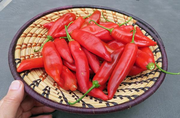 Kaleidoscope hot peppers
