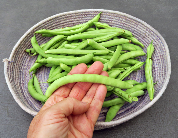 NT Half Runner beans