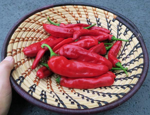 Dulce Rojo peppers