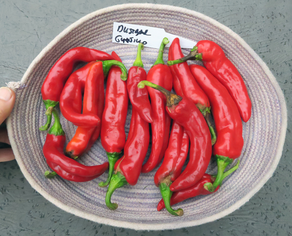 Dustbowl Seed Guajillo peppers