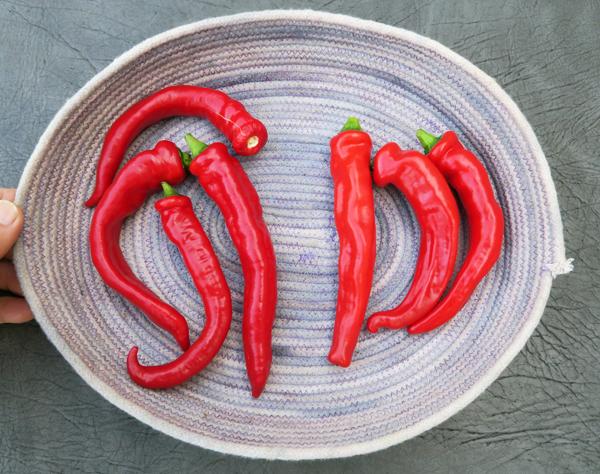 Jimmy Nardello and Manganji peppers