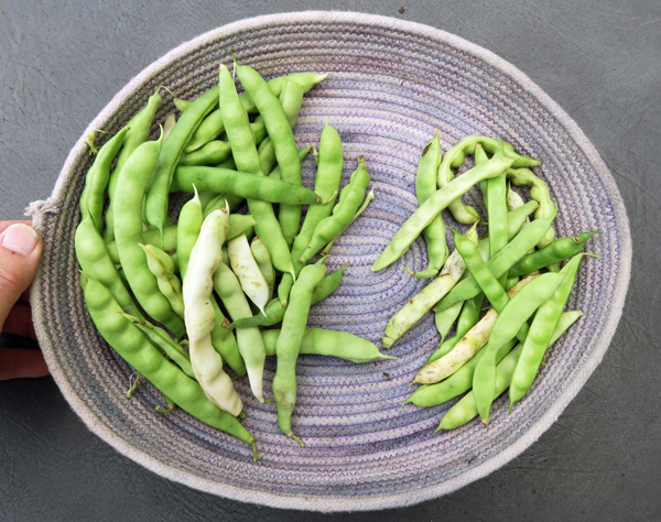 Turkey Craw and Doyce Chambers Greasy Cut-Short beans