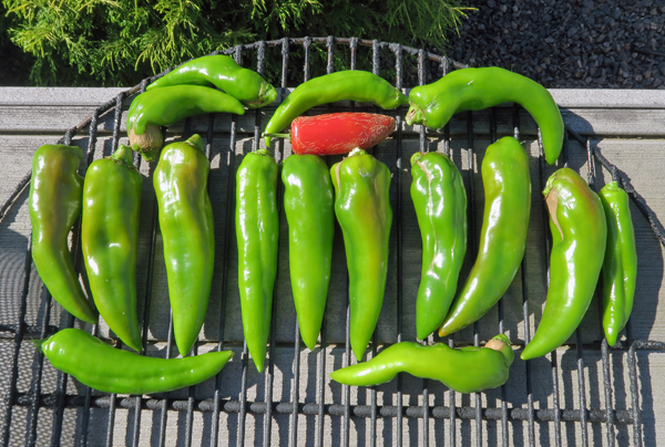 Numex peppers for smoking