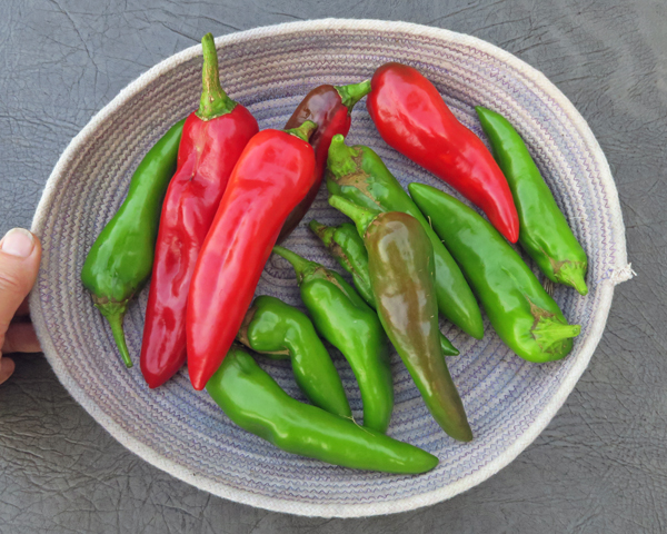Anaheim and Biggie Chile peppers