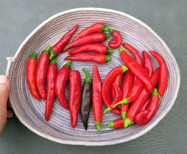 Korean peppers