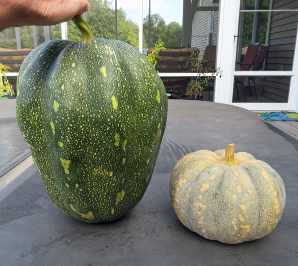 Rancho Marques squash