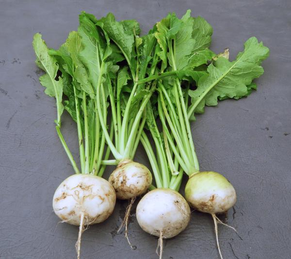 White Lady turnips