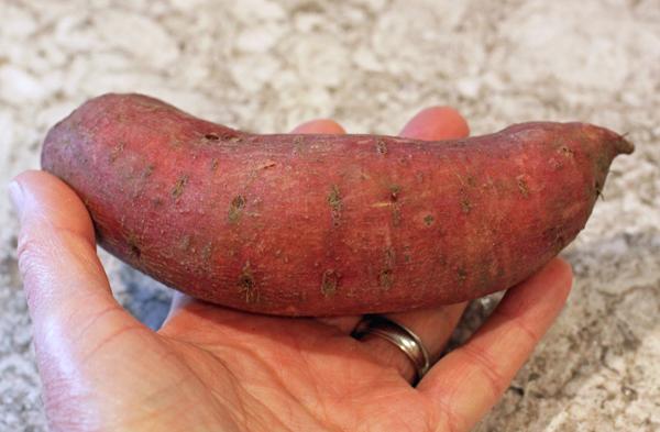 Carolina Ruby sweet potato