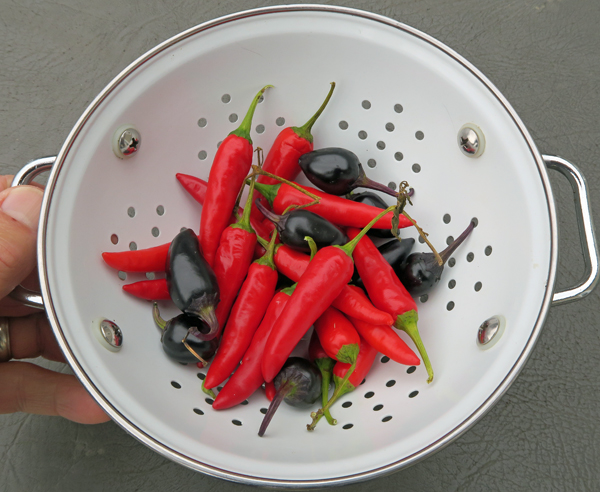 Cayennetta and Czech Black peppers